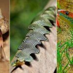 Les serpents les plus rares et les plus bizarres du monde