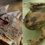 Ces animaux font tout pour survivre au danger ! Du jamais vu !