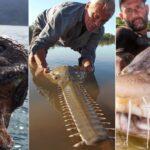 10 monstres de rivières effrayants que vous ne croyez pas exister