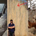 Les plus gros nids au monde, dont certains dépassent la taille humaine