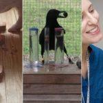 8 animaux intelligents aux incroyables capacités mentales