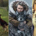 Histoires de 12 animaux qui ont sauvé des vies humaines !