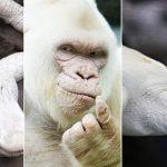 les plus beaux animaux blancs (photos fascinantes)