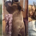 Les 10 moments les plus émouvants d'animaux filmés par une caméra