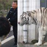 Les plus grandes évasions d'animaux sauvages de zoo