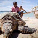Madagascar : 19 personnes meurent après avoir mangé une tortue de mer