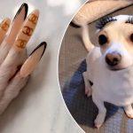 Une esthéticienne pose des faux ongles à son chihuahua