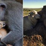 10 amitiés improbables entre animaux, certaines sont trop bizarres !
