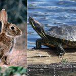 Pourquoi il ne faut jamais libérer ces animaux dans la nature !