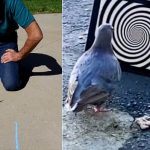 Saviez-vous qu'il était possible d'hypnotiser un animal ?