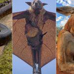 Photos insolites : les plus gros animaux du monde