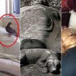 6 histoires de soutien d'animaux pour des personnes malades