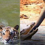 Les rencontres entres animaux les plus étranges filmées par caméra