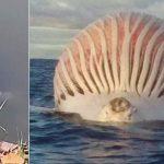 Les créatures marines les plus étranges (photos mystérieuses)
