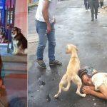 Quand les chiens deviennent de vrais héros pour leurs maîtres!